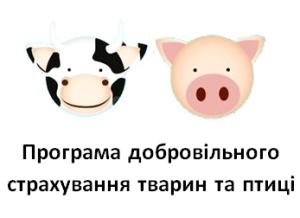 animal-insurance